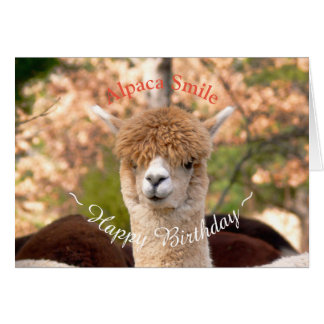 Alpaka-Schönheits-Geburtstags-Karte Grußkarte