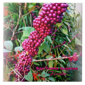 Amerikaner Beautyberry an den Bok Turm-Gärten Fliese