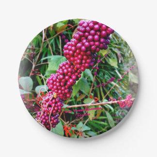 Amerikaner Beautyberry an den Bok Turm-Gärten Pappteller