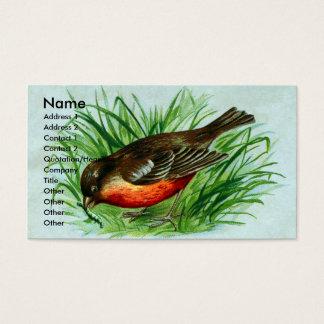 Amerikaner Robin fängt eine Raupe Visitenkarte