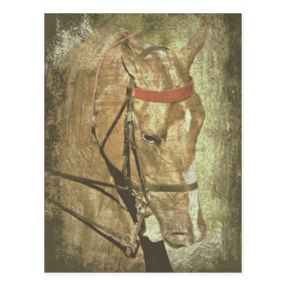 Amerikaner Saddlebred Postkarte