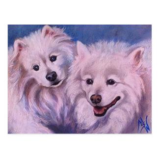 Amerikanische Eskimohunde Postkarten