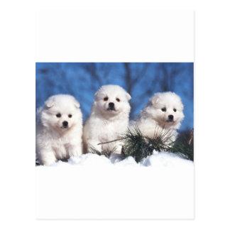 Amerikanische Eskimowelpenkarte Postkarte