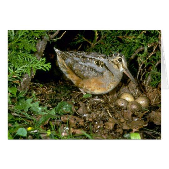Amerikanische Waldschnepfe mit Eiern Karte