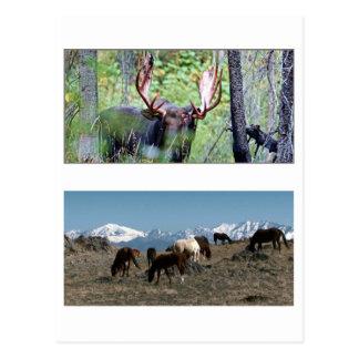Amerikanische wilde Tiere MUSTANG-PFERDErotwild Postkarte