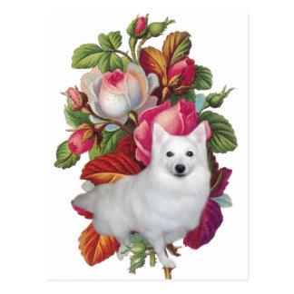 Amerikanischer Eskimohund mit Blumen Postkarten