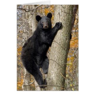 Amerikanischer schwarzer Bär, der einen Baum Karte
