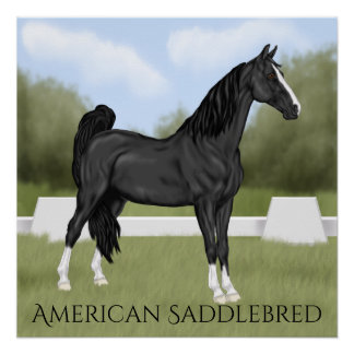 Amerikanisches Sattel-gezüchtetes Pferd Poster