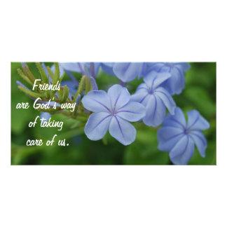 Amis - fleurs pourpres photocartes