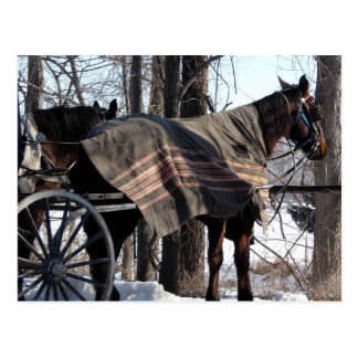 Amische Pferde warteten in Winter Postkarte