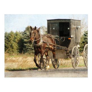 Amisches Pferd und Buggy Postkarte