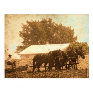 Amisches Team Postkarte