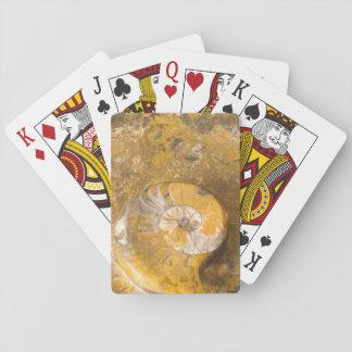 Ammonit versteinert und andere Fossilien im Felsen Pokerkarten
