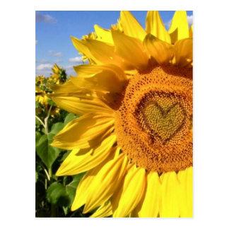 Amour dans les tournesols carte postale