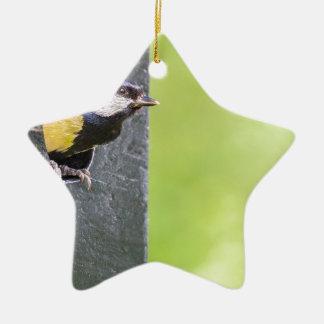 Amselelternteil im Loch des Nistkastens Keramik Stern-Ornament