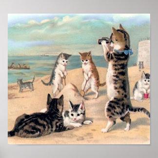 Amusement mignon de chat à la plage poster
