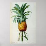 Ananas de Bromelia, de 'Les Bromeliacees Poster