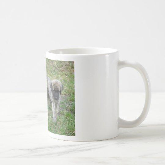 Anatolischer Schäfer-Welpen-Hund Kaffeetasse