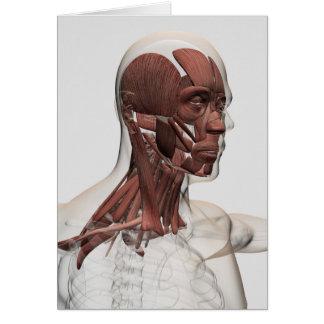 Anatomie der männlichen Gesichtsbehandlungs-und Grußkarte