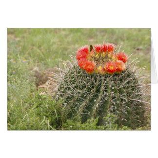 Angelhaken-Fass-Kaktus in der Blüte Karte