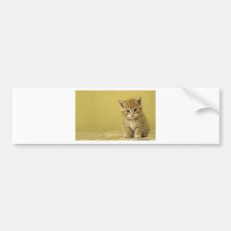 Animal - chaton curieux de bébé autocollant de voiture