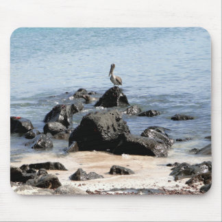 animals of the Galapagos Mousepad