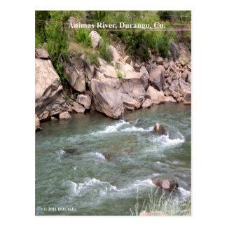 Animas-FlussRapids Postkarte