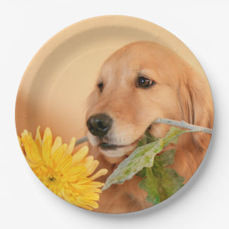 Anlass-goldener Retriever-Hund mit Blume Pappteller