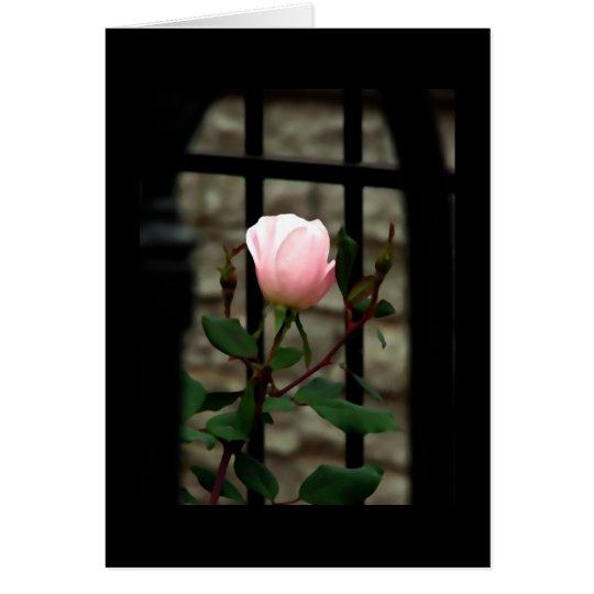 Anlass-Karte ~ Roses~ Blumenkunst-Fotografie Mitteilungskarte