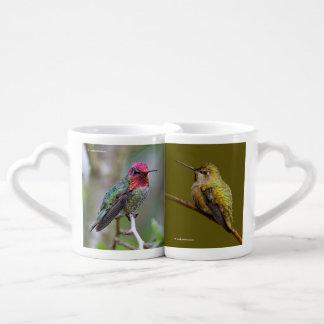 Annas Kolibri auf dem Scharlachrot Trumpetvine Liebestassen