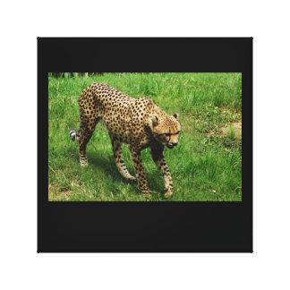 Anpirschender Gepard Leinwanddruck