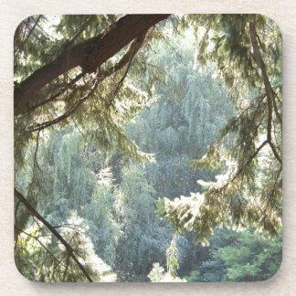 Ansicht durch die Bäume Getränkeuntersetzer