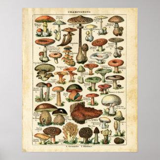 Antiker französischer Pilzdiagrammdruck Poster
