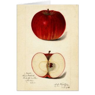 Apple-Frucht-Studie, die Illustration Notecard Karte