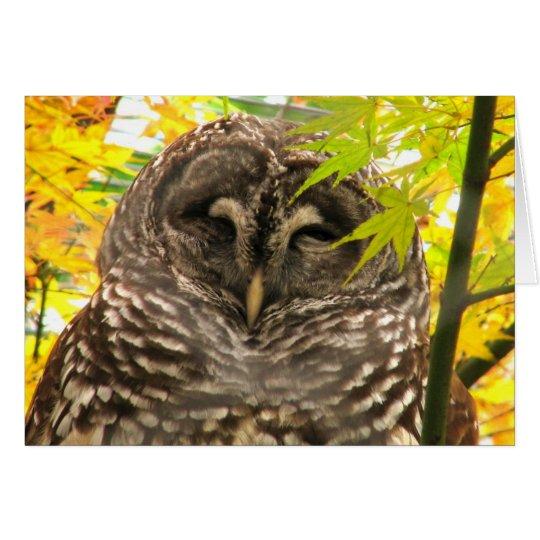 Appy Owlidays Grußkarte