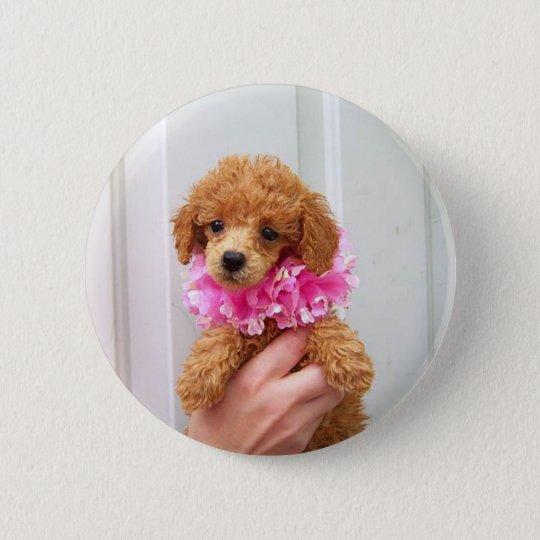 Aprikosen-Pudel-HundPinback Knopf Runder Button 5,1 Cm