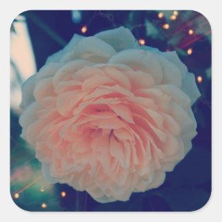 Aprikosen-Rosen-Klassiker-Aufkleber Quadratischer Aufkleber