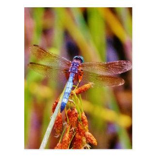 Aquamarine Libelle auf Segge Postkarte