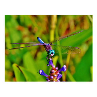 Aquamarine Regenbogen-Libelle Postkarte
