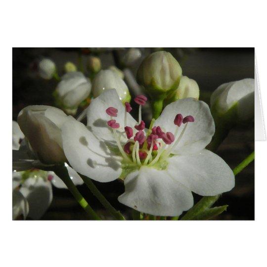 Aquarell-Birnen-Blüten-Anmerkungs-Karte Mitteilungskarte