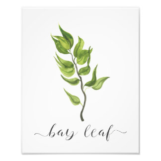 Aquarell-botanisches Kraut-Druck-Lorbeerblatt Fotodruck