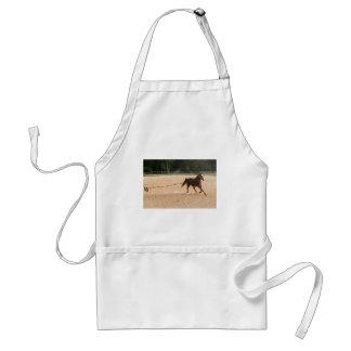 Arabisches Pferd Brown, das um Training läuft Schürze