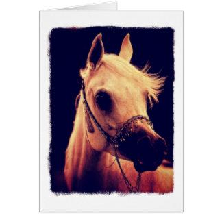 Arabisches Pferd in einem ShowHalter Karte