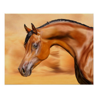 Arabisches Pferd Poster
