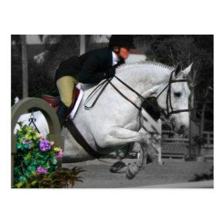 Arabisches Pferdespringen Postkarte