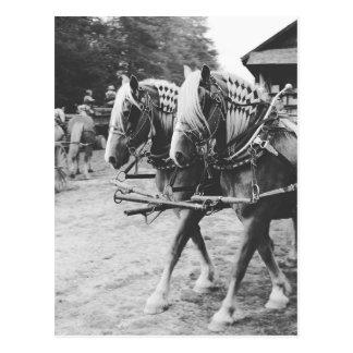 Arbeitsentwurf-Pferde in Schwarzweiss Postkarte