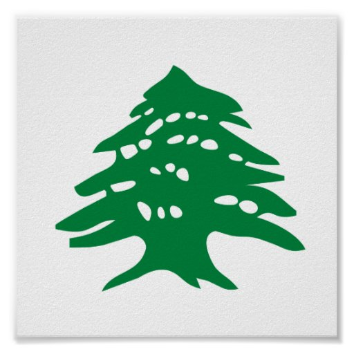 Arbre de c dre vert du liban poster zazzle - Cedre bleu du liban ...