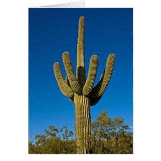 Arizona-Natur-Gruß-Karte 3997 Karte