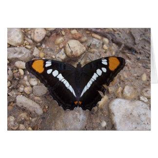 Arizona-Schwester-Schmetterlingskarte Grußkarte