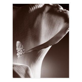 Arrière - plan blanc de noir de fleur de carte postale